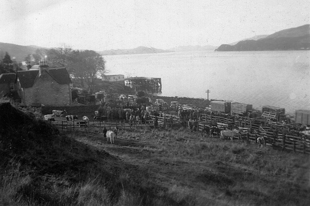 Creggans Cattle Market