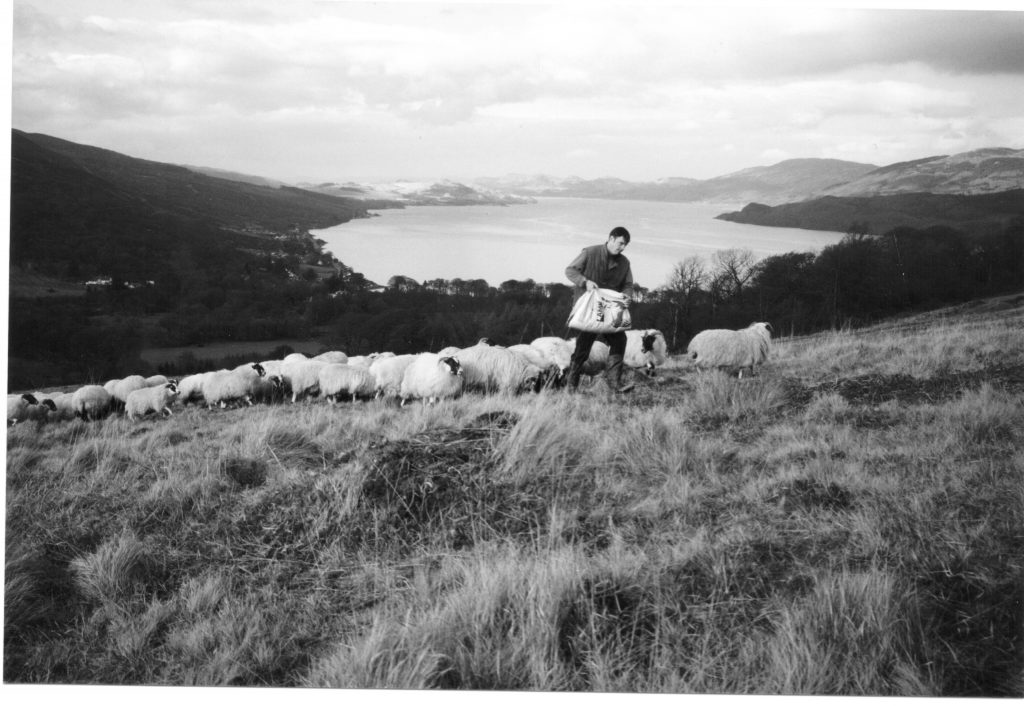 Ali Paterson Feeding the sheep TV mast area