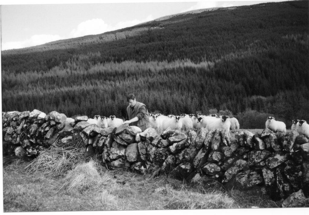 Horses Dyke, Strachurmore 1998